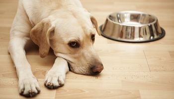 How To Cancel Tails Dog Food